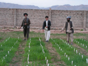 QTL assisted selection for salt tolerance of barley